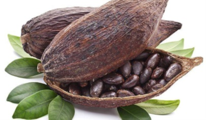 The risks and tricks associated with loading cocoa beans in containers
